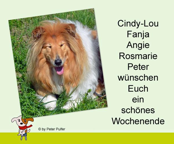An den Beitrag angehängtes Bild: http://colliewelt.de/whitehorsehill/Bilder/Userbilder/1957.jpg