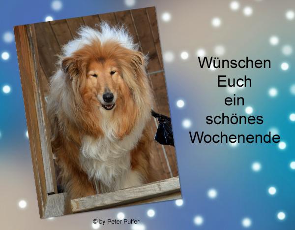 An den Beitrag angehängtes Bild: http://colliewelt.de/whitehorsehill/Bilder/Userbilder/1966.jpg