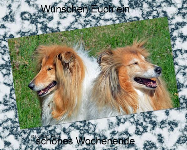 An den Beitrag angehängtes Bild: http://colliewelt.de/whitehorsehill/Bilder/Userbilder/1980.jpg
