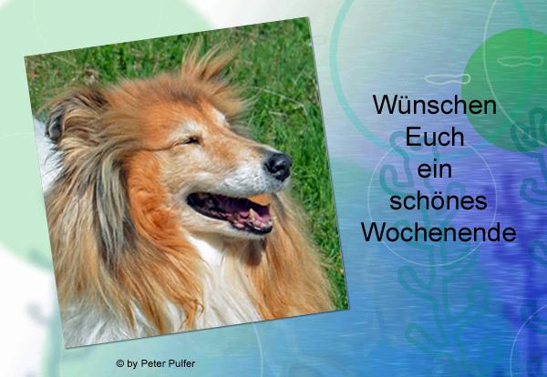 An den Beitrag angehängtes Bild: http://colliewelt.de/whitehorsehill/Bilder/Userbilder/1983.jpg