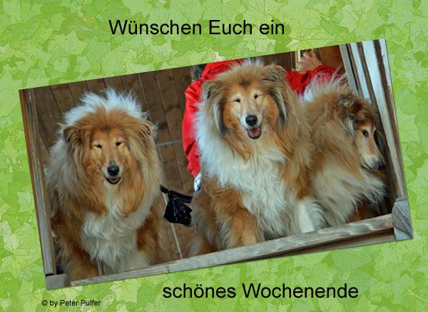 An den Beitrag angehängtes Bild: http://colliewelt.de/whitehorsehill/Bilder/Userbilder/1989.jpg