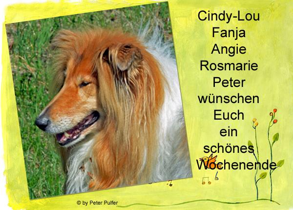An den Beitrag angehängtes Bild: http://colliewelt.de/whitehorsehill/Bilder/Userbilder/1998.jpg