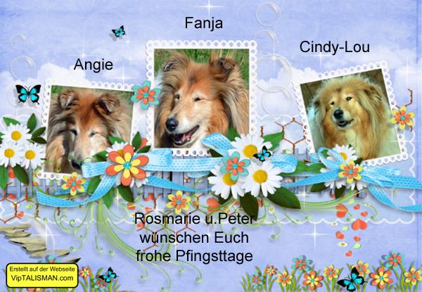 An den Beitrag angehängtes Bild: http://colliewelt.de/whitehorsehill/Bilder/Userbilder/2005.jpg