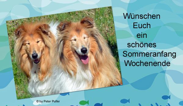 An den Beitrag angehängtes Bild: http://colliewelt.de/whitehorsehill/Bilder/Userbilder/2008.jpg
