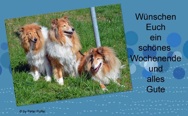 An den Beitrag angehängtes Bild: http://colliewelt.de/whitehorsehill/Bilder/Userbilder/2011.jpg