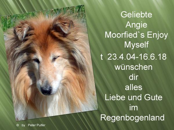 An den Beitrag angehängtes Bild: http://colliewelt.de/whitehorsehill/Bilder/Userbilder/2012.jpg
