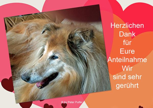 An den Beitrag angehängtes Bild: http://colliewelt.de/whitehorsehill/Bilder/Userbilder/2013.jpg