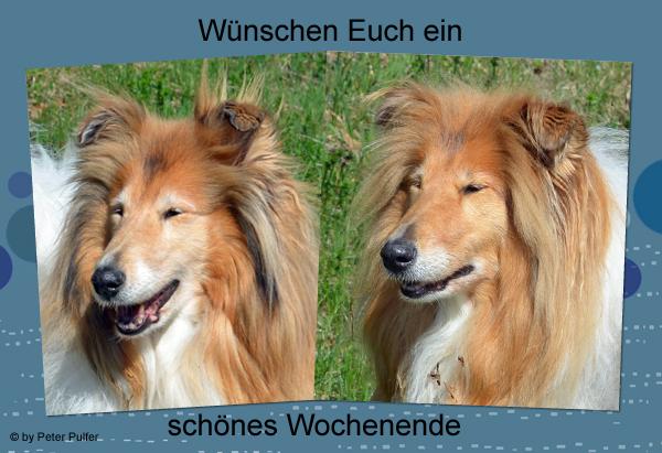 An den Beitrag angehängtes Bild: http://colliewelt.de/whitehorsehill/Bilder/Userbilder/2032.jpg
