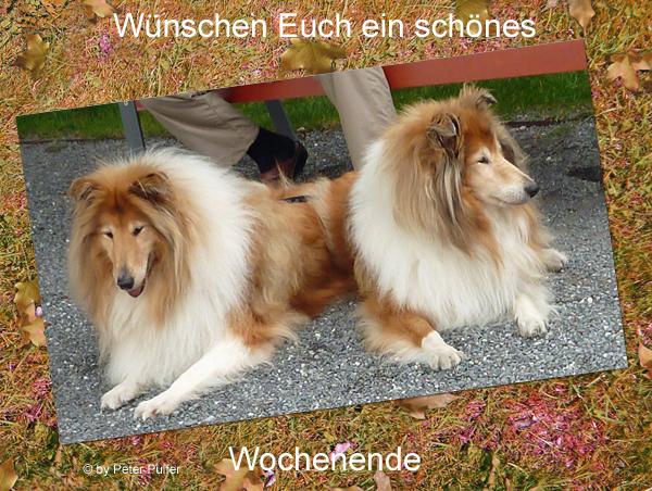 An den Beitrag angehängtes Bild: http://colliewelt.de/whitehorsehill/Bilder/Userbilder/2044.jpg