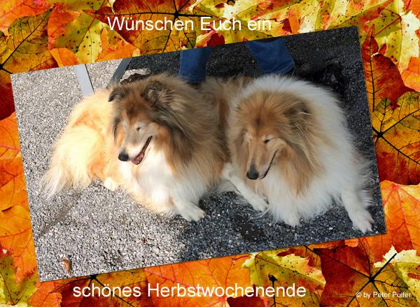 An den Beitrag angehängtes Bild: http://colliewelt.de/whitehorsehill/Bilder/Userbilder/2046.jpg