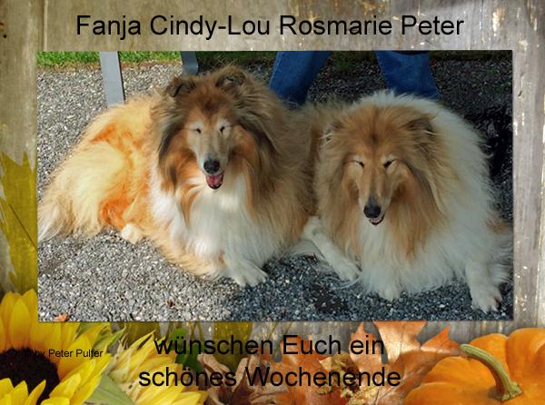 An den Beitrag angehängtes Bild: http://colliewelt.de/whitehorsehill/Bilder/Userbilder/2048.jpg