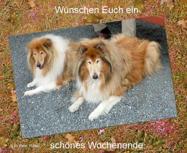 An den Beitrag angehängtes Bild: http://colliewelt.de/whitehorsehill/Bilder/Userbilder/2049.jpg
