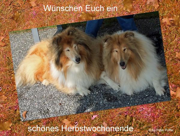 An den Beitrag angehängtes Bild: http://colliewelt.de/whitehorsehill/Bilder/Userbilder/2050.jpg