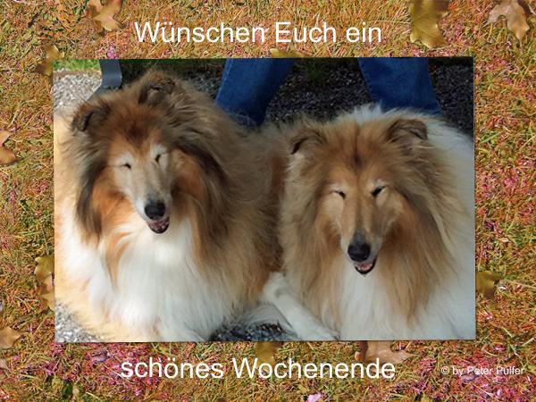 An den Beitrag angehängtes Bild: http://colliewelt.de/whitehorsehill/Bilder/Userbilder/2054.jpg