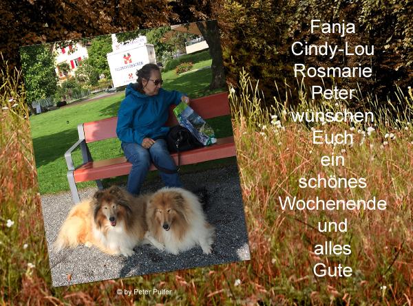 An den Beitrag angehängtes Bild: http://colliewelt.de/whitehorsehill/Bilder/Userbilder/2055.jpg