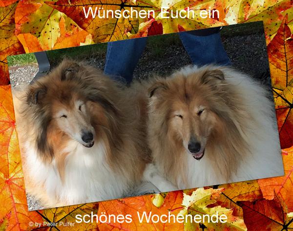 An den Beitrag angehängtes Bild: http://colliewelt.de/whitehorsehill/Bilder/Userbilder/2056.jpg