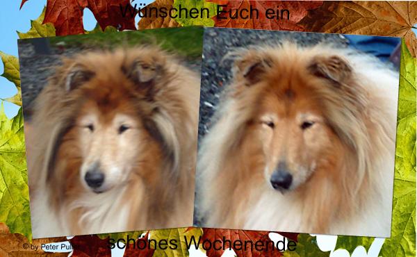 An den Beitrag angehängtes Bild: http://colliewelt.de/whitehorsehill/Bilde,r/Userbilder/2059.jpg
