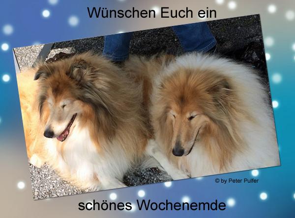 An den Beitrag angehängtes Bild: http://colliewelt.de/whitehorsehill/Bilde,r/Userbilder/2096.jpg
