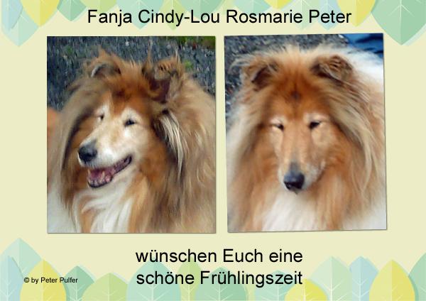 An den Beitrag angehängtes Bild: http://colliewelt.de/whitehorsehill/Bilder/Userbilder/2101.jpg.