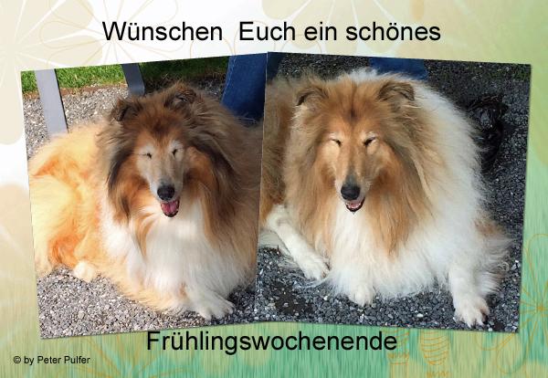 An den Beitrag angehängtes Bild: http://colliewelt.de/whitehorsehill/Bilder/Userbilder/2102.jpg.