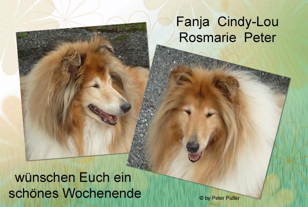 An den Beitrag angehängtes Bild: http://colliewelt.de/whitehorsehill/Bilder/Userbilder/2105.jpg.