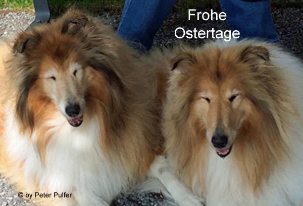 An den Beitrag angehängtes Bild: http://colliewelt.de/whitehorsehill/Bilder/Userbilder/2106.jpg.