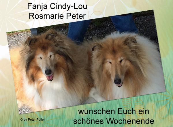 An den Beitrag angehängtes Bild: http://colliewelt.de/whitehorsehill/Bilder/Userbilder/2107.jpg.