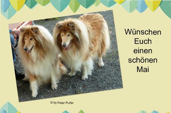 An den Beitrag angehängtes Bild: http://colliewelt.de/whitehorsehill/Bilder/Userbilder/2108.jpg.
