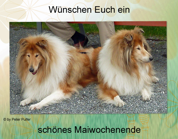 An den Beitrag angehängtes Bild: http://colliewelt.de/whitehorsehill/Bilder/Userbilder/2110.jpg.