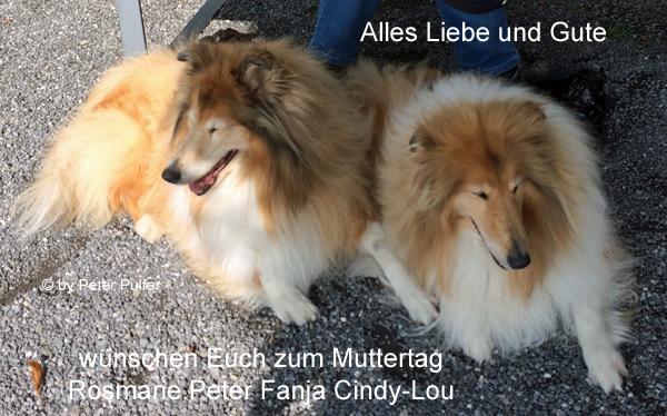 An den Beitrag angehängtes Bild: http://colliewelt.de/whitehorsehill/Bilder/Userbilder/2111.jpg.