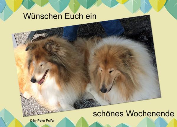 An den Beitrag angehängtes Bild: http://colliewelt.de/whitehorsehill/Bilder/Userbilder/2116.jpg