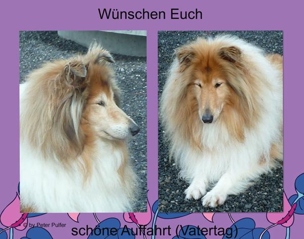An den Beitrag angehängtes Bild: http://colliewelt.de/whitehorsehill/Bilder/Userbilder/2117.jpg