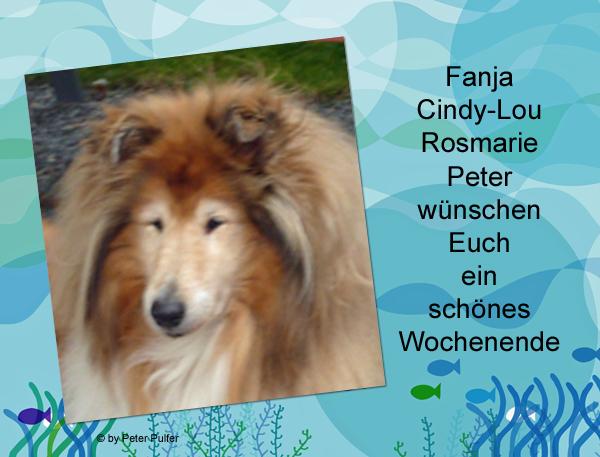 An den Beitrag angehängtes Bild: http://colliewelt.de/whithorsehill/Bilder/Userbilder/2120.jpg.