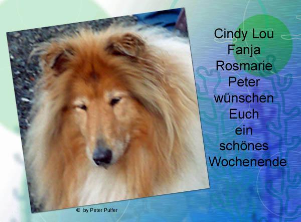 An den Beitrag angehängtes Bild: http://colliewelt.de/whitehorsehill/Bilder/Userbilder/2121.jpg