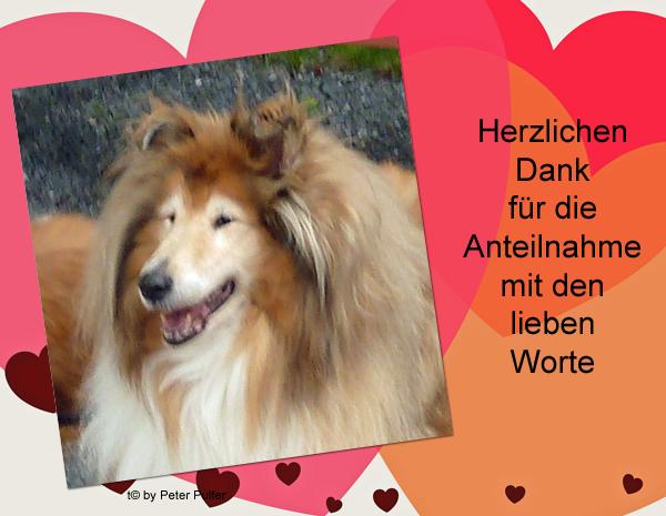 An den Beitrag angehängtes Bild: http://colliewelt.de/whithorsehill/Bilder/Userbilder/2122.jpg.