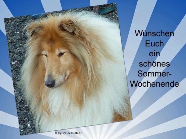 An den Beitrag angehängtes Bild: http://colliewelt.de/whithorsehill/Bilder/Userbilder/2123.jpg.