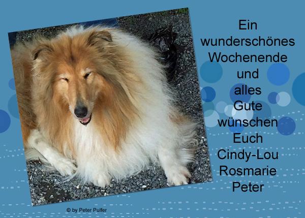 An den Beitrag angehängtes Bild: http://colliewelt.de/whitehorsehill/Bilder/Userbilder/2127.jpg
