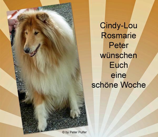 An den Beitrag angehängtes Bild: http://colliewelt.de/whithorsehill/Bilder/Userbilder/2130.jpg.