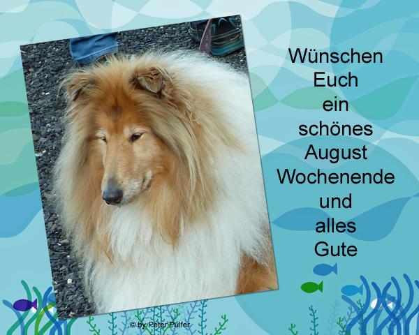 An den Beitrag angehängtes Bild: http://colliewelt.de/whithorsehill/Bilder/Userbilder/2135.jpg.