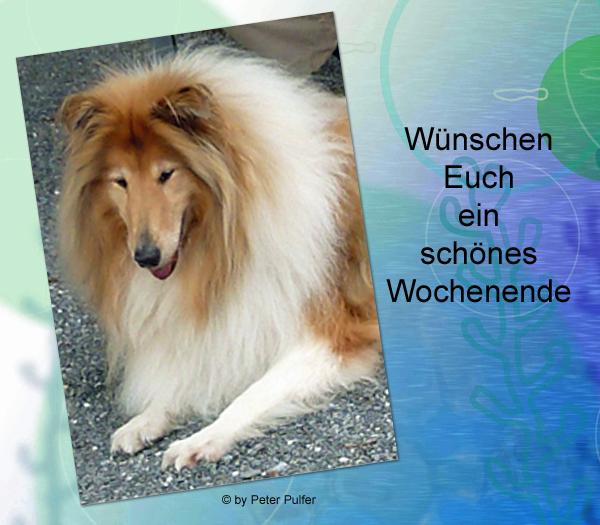 An den Beitrag angehängtes Bild: http://colliewelt.de/whithorsehill/Bilder/Userbilder/2136.jpg.