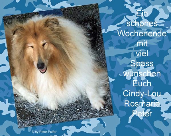 An den Beitrag angehängtes Bild: http://colliewelt.de/whithorsehill/Bilder/Userbilder/2139.jpg.