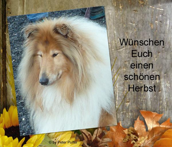 An den Beitrag angehängtes Bild: http://colliewelt.de/whithorsehill/Bilder/Userbilder/2142.jpg.