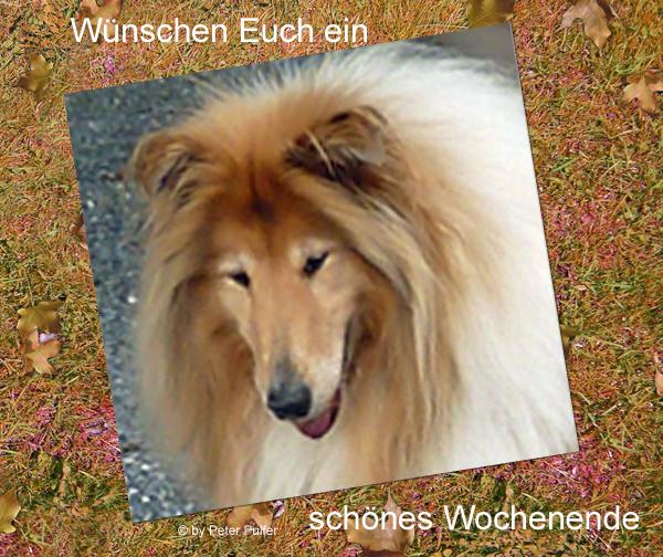 An den Beitrag angehängtes Bild: http://colliewelt.de/whithorsehill/Bilder/Userbilder/2144.jpg.