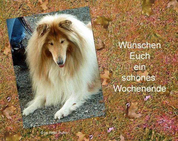 An den Beitrag angehängtes Bild: http://colliewelt.de/whithorsehill/Bilder/Userbilder/2149.jpg.