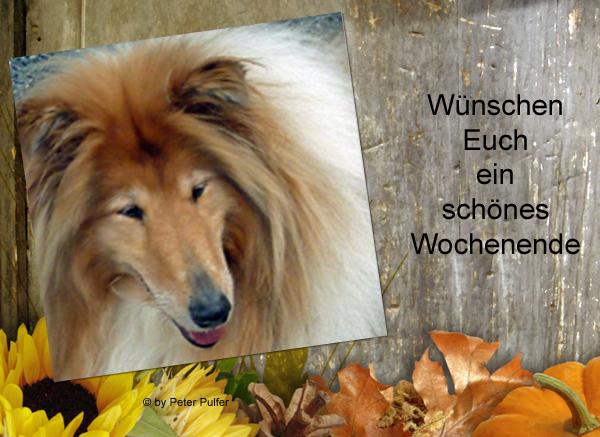 An den Beitrag angehängtes Bild: http://colliewelt.de/whithorsehill/Bilder/Userbilder/2150.jpg.
