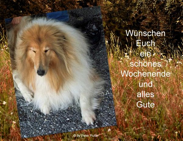 An den Beitrag angehängtes Bild: http://colliewelt.de/whithorsehill/Bilder/Userbilder/2151.jpg.