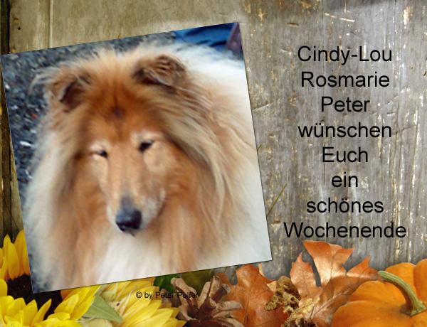 An den Beitrag angehängtes Bild: http://colliewelt.de/whithorsehill/Bilder/Userbilder/2155.jpg.