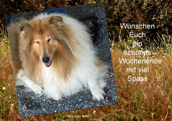 An den Beitrag angehängtes Bild: http://colliewelt.de/whithorsehill/Bilder/Userbilder/2156.jpg.