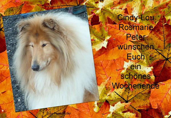 An den Beitrag angehängtes Bild: http://colliewelt.de/whithorsehill/Bilder/Userbilder/2157.jpg.