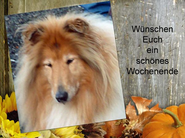 An den Beitrag angehängtes Bild: http://colliewelt.de/whithorsehill/Bilder/Userbilder/2158.jpg.